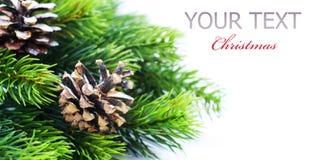 De Grens van de kerstboom Stock Foto's