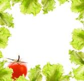 De grens van de salade en van de tomaat stock afbeelding