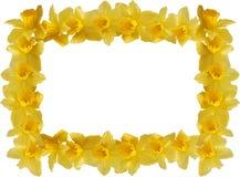 De Grens van gele narcissen Stock Fotografie