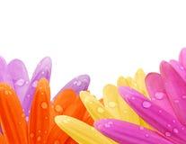 De Grens van het Bloemblaadje van Gerbera van de pastelkleur royalty-vrije stock afbeeldingen
