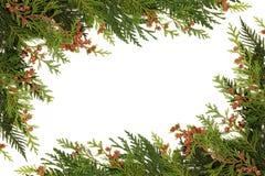 De Grens van het Groen van de winter Stock Foto