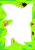 De Grens van het insect Royalty-vrije Stock Afbeeldingen