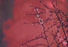 De grens van de de lentebloesem over rode arty geweven achtergrond Het Chinese nieuwe uitstekende ontwerp van de jaaraard royalty-vrije stock foto's