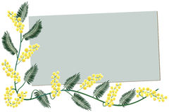 De grens van mimosa's - de kaart van de Groet Royalty-vrije Stock Foto's