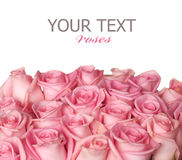 De Grens van rozen Stock Foto
