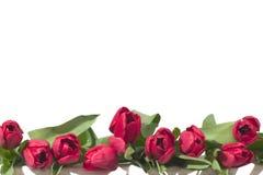 De Grens van tulpen Stock Afbeelding