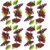 De grensbloemen Echinacea van de waterverfillustratie stock illustratie