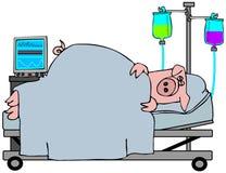 De Griep van varkens Royalty-vrije Stock Foto