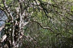 De griezelige bosboom vertakt zich deksel door de Zon stock foto
