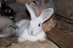 De grijs-witte zwarte konijnen in een kooi op het landbouwbedrijf leven royalty-vrije stock fotografie