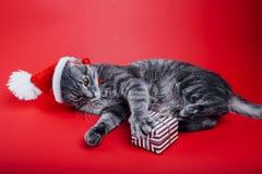 De grijze gestreepte katkat draagt Kerstman` s hoed op rode achtergrond en speelt met een giftdoos Het concept van Kerstmis en va stock afbeelding