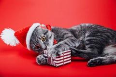 De grijze gestreepte katkat draagt Kerstman` s hoed op rode achtergrond en speelt met een giftdoos Het concept van Kerstmis en va stock fotografie