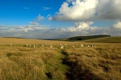 De grijze hamels, het nationale park Devon van Dartmoor Stock Foto