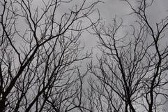 De grijze hemel van de winterbomen Royalty-vrije Stock Fotografie
