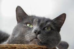De grijze kat heeft een dutje in de rieten mand Stock Afbeeldingen