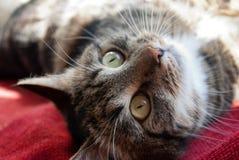 De grijze kat ligt op een venstervensterbank op een vage achtergrond in de stralen van de zon Stock Foto