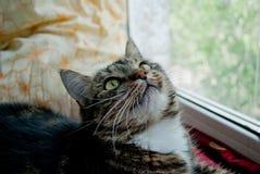 De grijze kat ligt op een venstervensterbank op een vage achtergrond in de stralen van de zon Stock Afbeelding