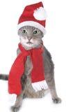 De grijze kat van Kerstmis Stock Foto's