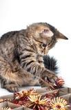 De grijze kattenspelen met het speelgoed van een rood Nieuwjaar Stock Foto's