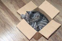 De grijze slaap van de gestreepte katkat in een kleine doos, het concept een huis voor de dieren Stock Fotografie