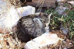De grijze slaap van de huiskat onder de stenen op het droge gras Het rusten van een huisdier Huisdierenfamilie van felines Muisja stock afbeelding