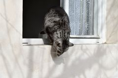 De grijze sprongen van de gestreepte katkat uit het venster Stock Afbeelding