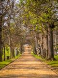 De grintrijweg verdwijnt over een heuvel Gevoerd door een weg van oude eiken bomen Royalty-vrije Stock Afbeelding