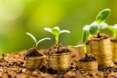 De groei Royalty-vrije Stock Afbeeldingen