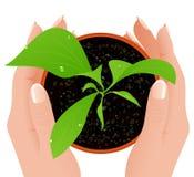 De groei in menselijke handen stock illustratie