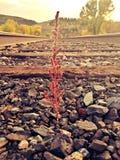 De groei ondanks milieu Royalty-vrije Stock Fotografie