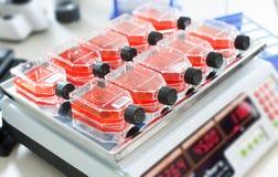 De groei van bacteriële cultuur royalty-vrije stock afbeelding