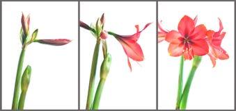 De groei van bloemen. Royalty-vrije Stock Foto's