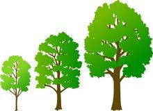 De Groei van de boom/eps Stock Foto's