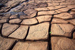 De groei van de installatie in droge gebarsten modder Royalty-vrije Stock Foto's