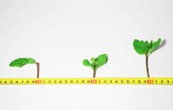 De groei van de spruit Stock Fotografie