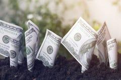 De groei van de dollarsrekening omhoog met grond, die geld, besparing en investering, concept planten zoals investeren over zaken royalty-vrije stock foto