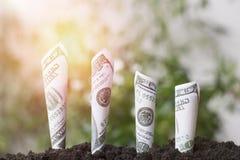 De groei van de dollarsrekening omhoog met grond, die geld, besparing en investering, concept planten zoals investeren over zaken royalty-vrije stock afbeelding