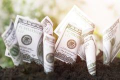 De groei van de dollarsrekening omhoog met grond, die geld, besparing en investering, concept planten zoals investeren over zaken stock fotografie