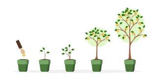 De groei van de geldboom vector illustratie