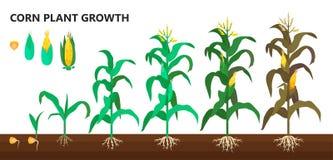 De groei van de graaninstallatie, landbouwbedrijf en landbouwstappen royalty-vrije illustratie