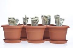 De groei van het geld Stock Afbeeldingen