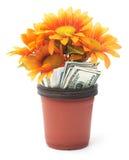 De Groei van het geld Honderd dollarrekening het groeien in het groene gras Stock Afbeelding