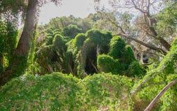 De Groei van het moerasland stock foto