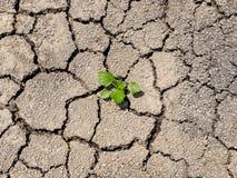 De groei van het spruitbegin op de gebarsten grond Royalty-vrije Stock Foto