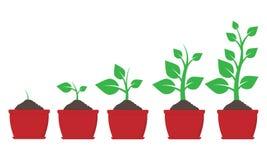 De groei van installatie in pot Vector illustratie stock illustratie
