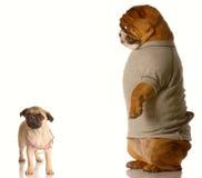 De groeiconcept van het puppy Stock Foto