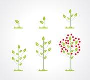 De groeiende reeks van het boompictogram Stock Afbeeldingen