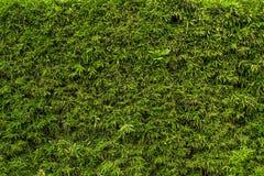 De groeiende textuur van de grasoppervlakte Stock Afbeeldingen