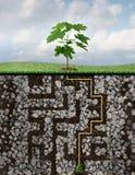 De groeioplossingen Royalty-vrije Stock Foto