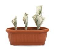De groeiproces van het geld Stock Afbeelding